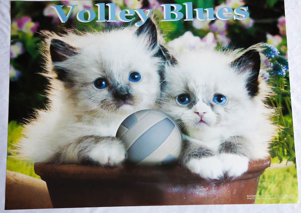 Volley Blues